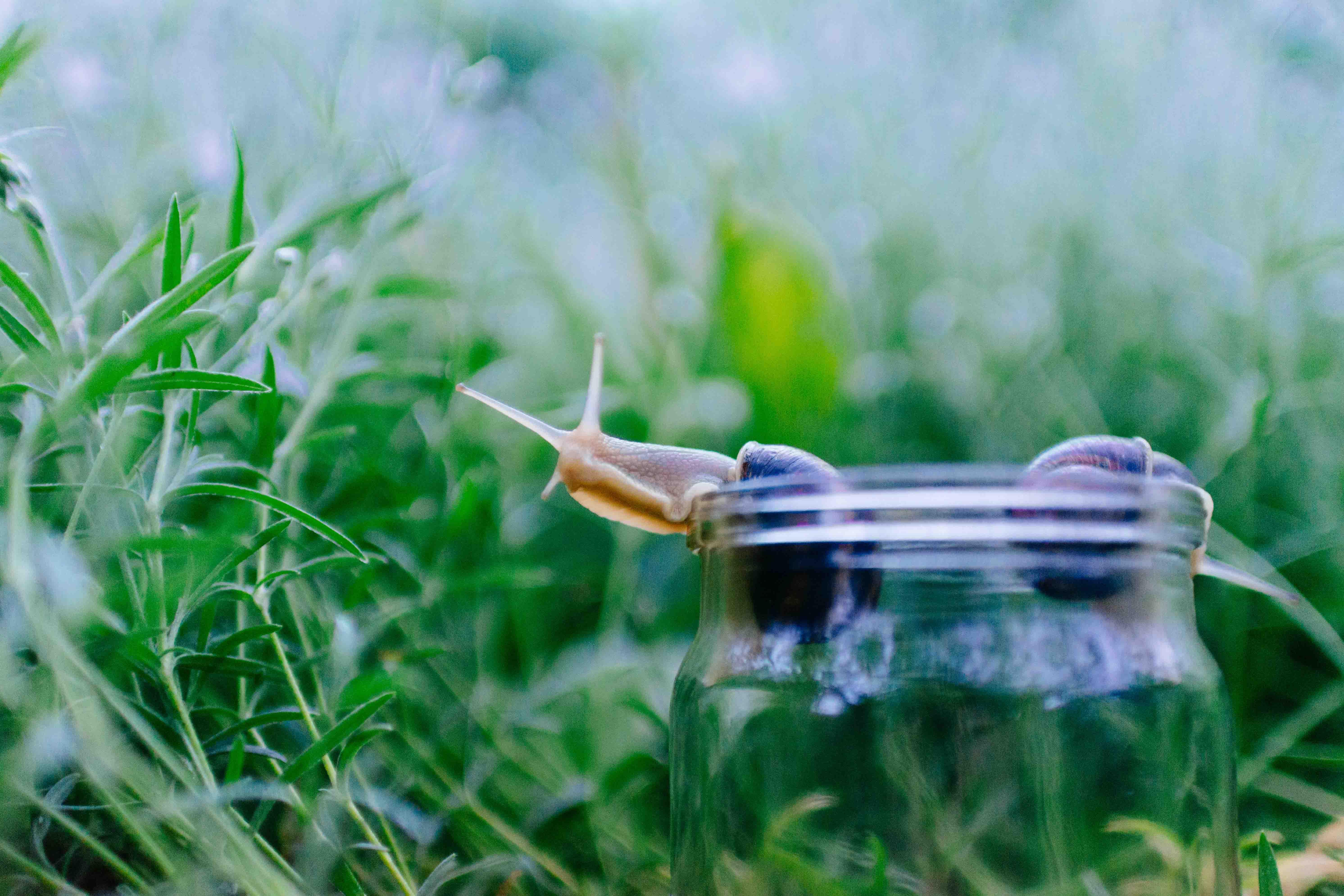 Petit escargot s'échappant d'un bocal