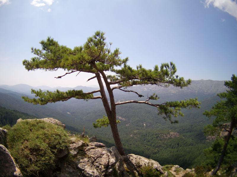 Paysage de Corse cet été en colonie de vacances