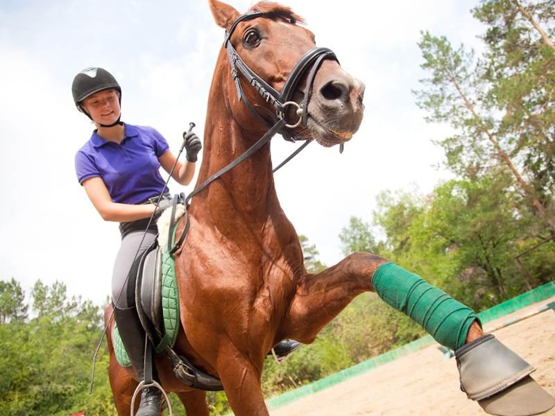 Adolescente faisant de l'équitation en colonie de vacances à la montagne cet été
