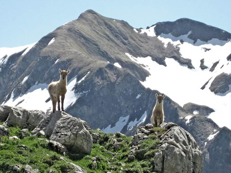 Vue sur les montages de courchevel et la faune de montagne en colonie de vacances d'été