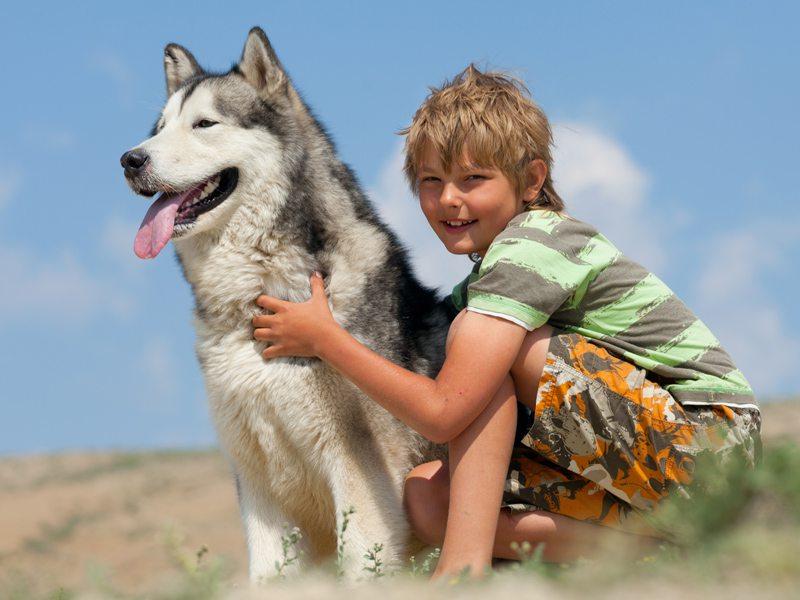 Enfant avec son chien en canirando en colo
