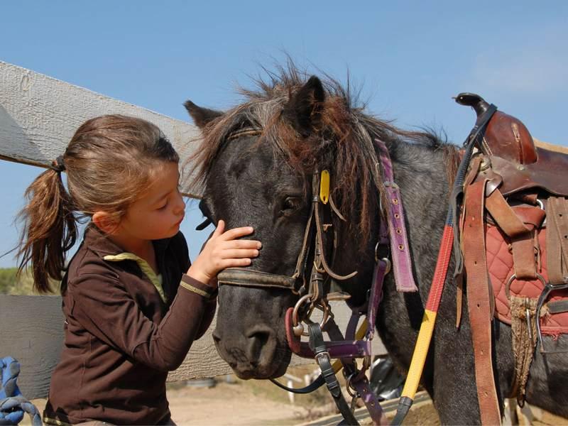 Fillette s'occupant de son poney en colonie de vacances équitation été