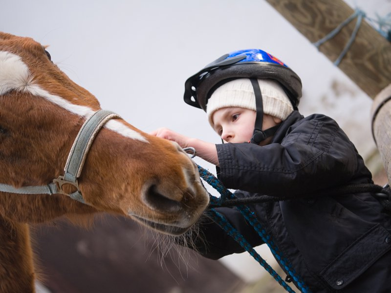Portrait d'un jeune garçon s'occupant d'un cheval en colonie de vacances