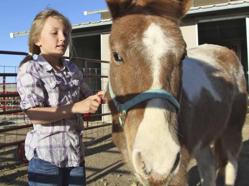 Fillette brossant son cheval en colo été