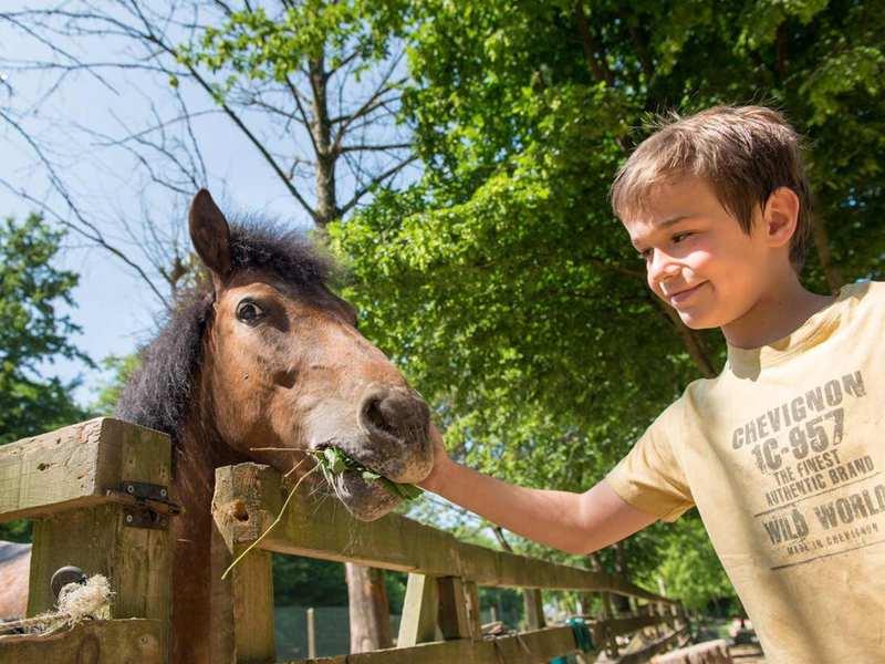 Jeune garçon caressant son cheval en colonie de vacances été