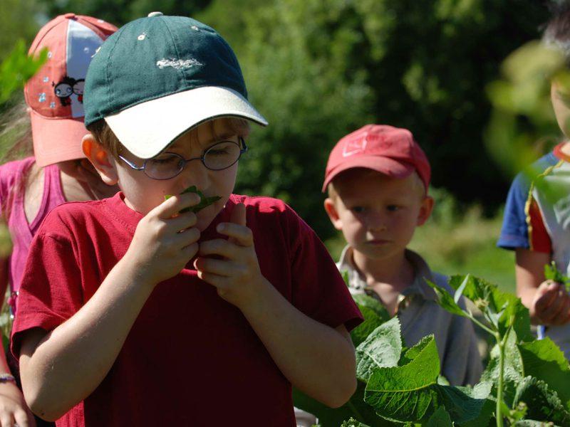 Enfants découvrant les plantes du jardin en colonie de vacances à la campangne