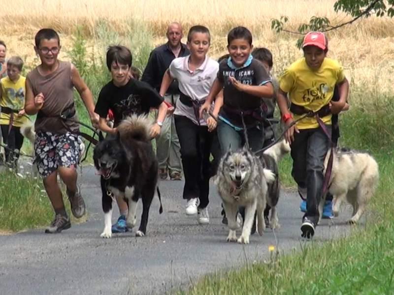 Groupe de jeunes garçon courant avec leurs chiens en canirando en colonie de vacances à la campagne été