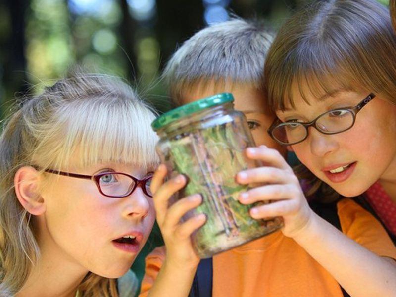 Trois enfants observant des insectes dans un bocal en colonie de vacances été
