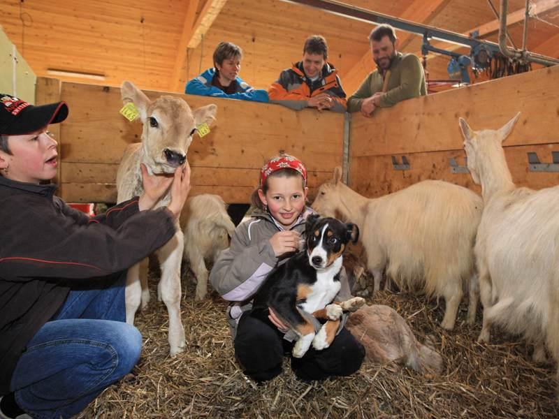 Fillette avec les animaux de la ferme en colonie de vacances cuisine et ferme été