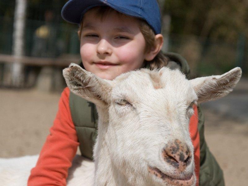 Portrait d'un jeune garçon avec un animal de la ferme en colonie de vacances cuisine été