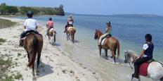 Camargue, équitation & passion