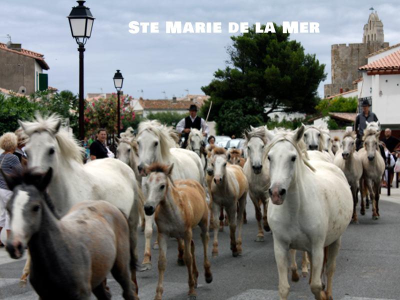 Fête du cheval à Sainte marie de la mer en colonie de vacances