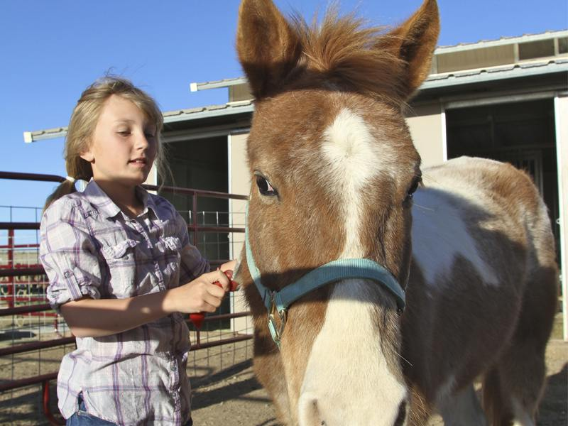 Fillette prenant soin de son cheval en colonie de vacances équitation