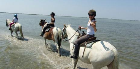 Camargue, équitation et passion