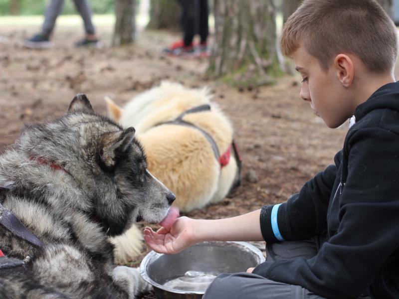 Enfant donnant à boire aux chiens de canirando en colonie de vacances été