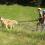 Colonie de vacances avec les husky