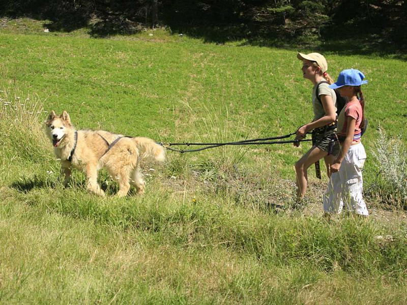 Deux fillettes en balade en canirando avec leur chien en colonie de vacances été