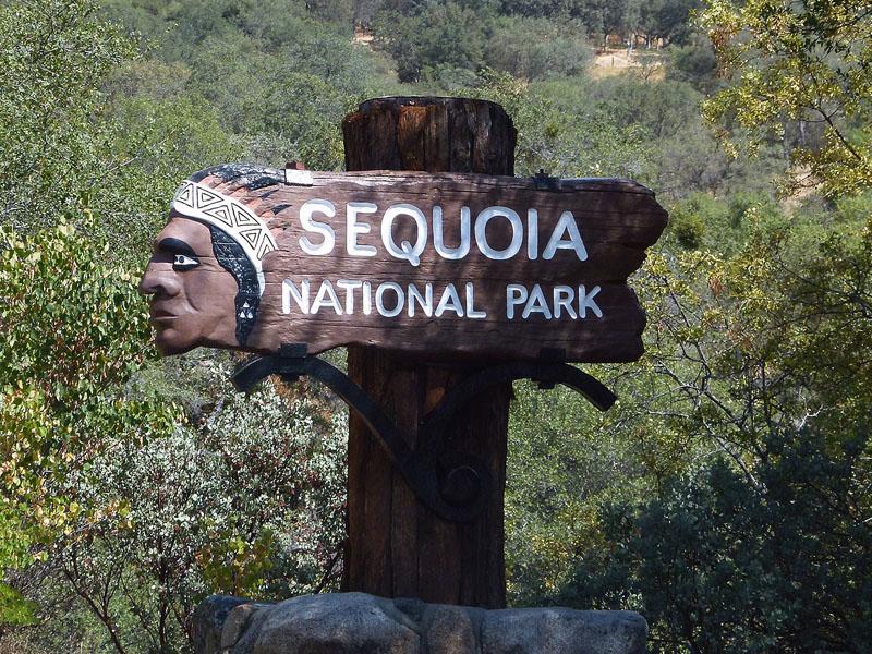 Visite de Sequoia park en colonie de vacances aux Etats Unis cet été