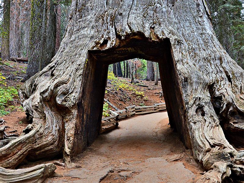 Adolescents visitant le sequoia park en colonie de vacances d'été