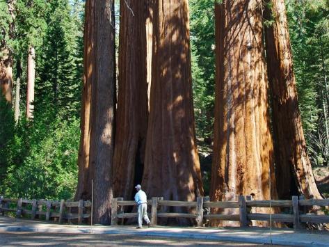 Sequoia Park colonie de vacances pour ados en Californie été