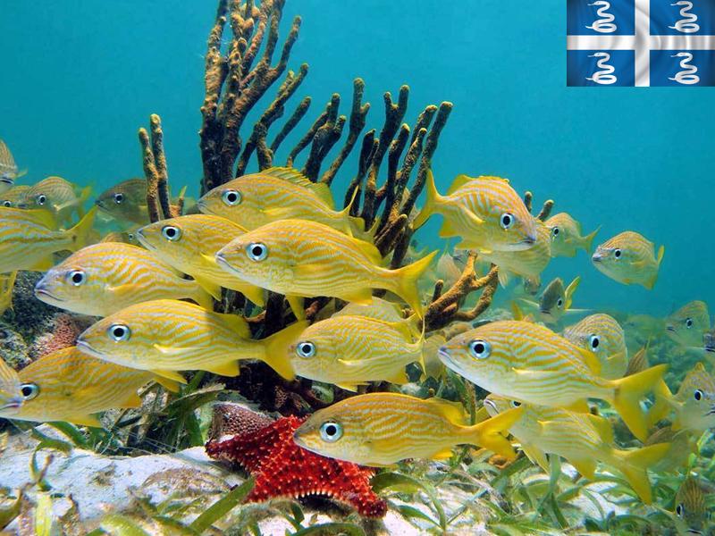 Plongée sous marine pour observer les poissons en colonie de vacances en martinique cet été