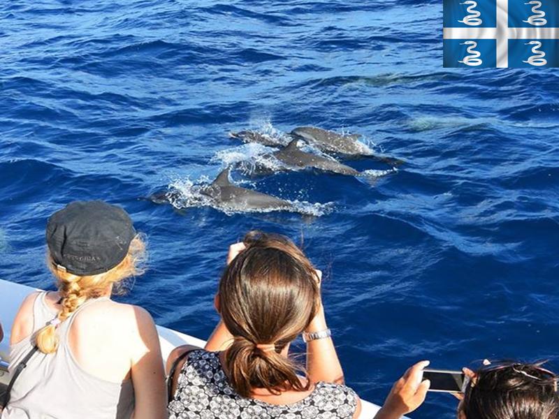 Adolescents observant les dauphins en colonie de vacances en martinique cet été