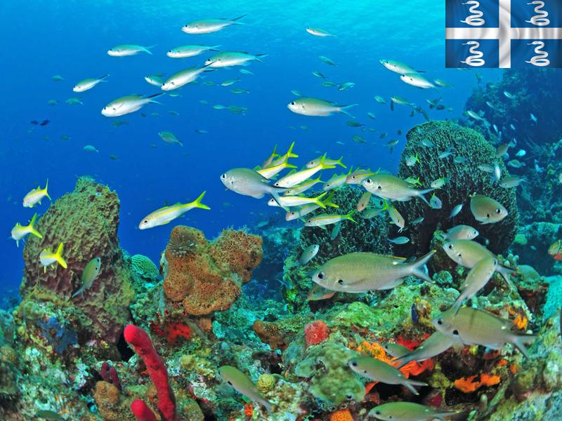 Plongée sous marine en colonie de vacances en martinique