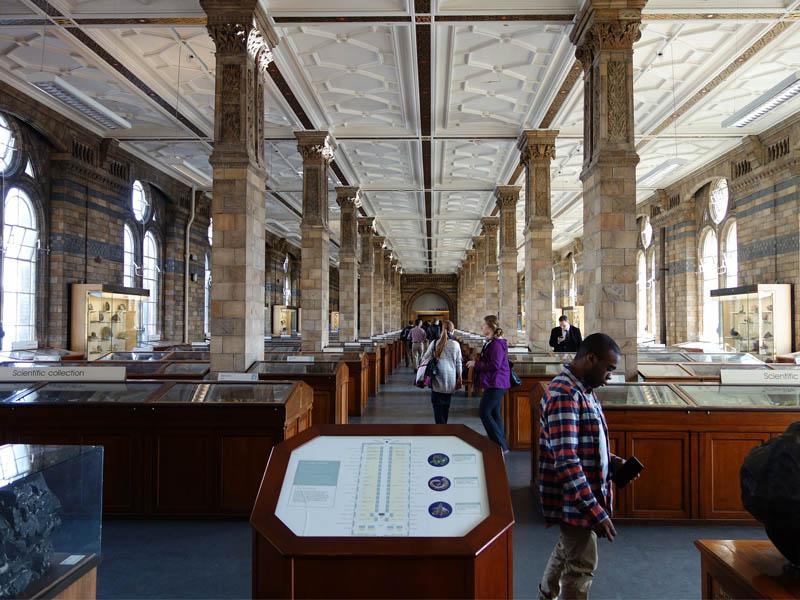 La collection scientifique du musée d'histoire naturelle de Londres en Angleterre