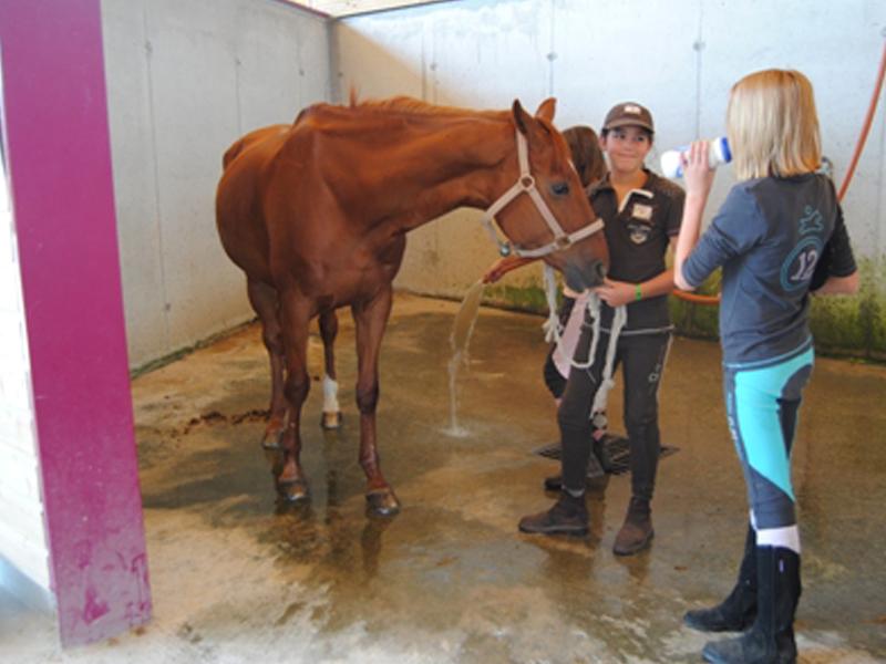 Adolescentes apprenant à s'occuper des chevaux en stage sportif