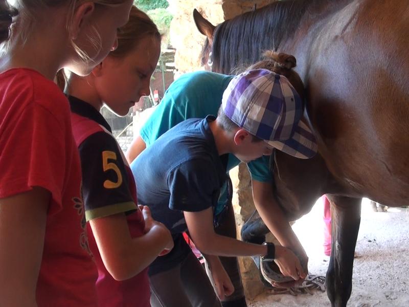 enfants apprenant à s'occuper des fers des cheveux en stage sportif équitation