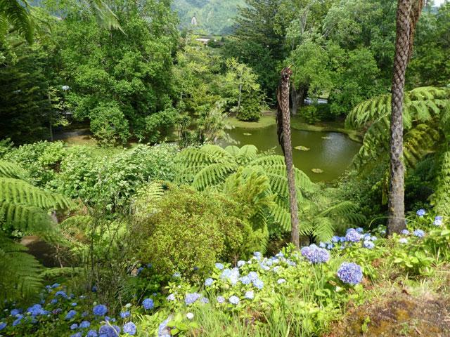 jungle luxuriante des açores cet été en colonie de vacances