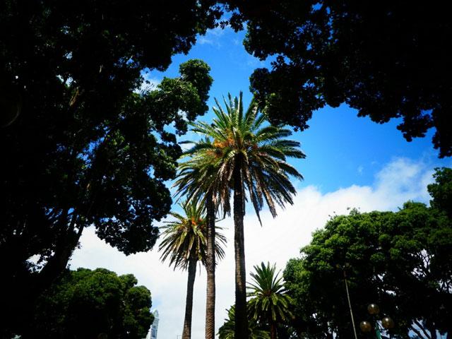 vue sur les palmiers des açores en colonie de vacances cet éé