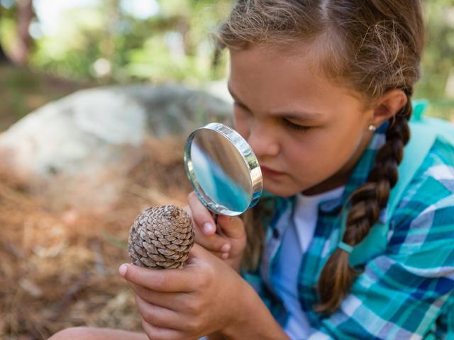 Jeune fille observant une pomme de pin en colonie de vacances d'été