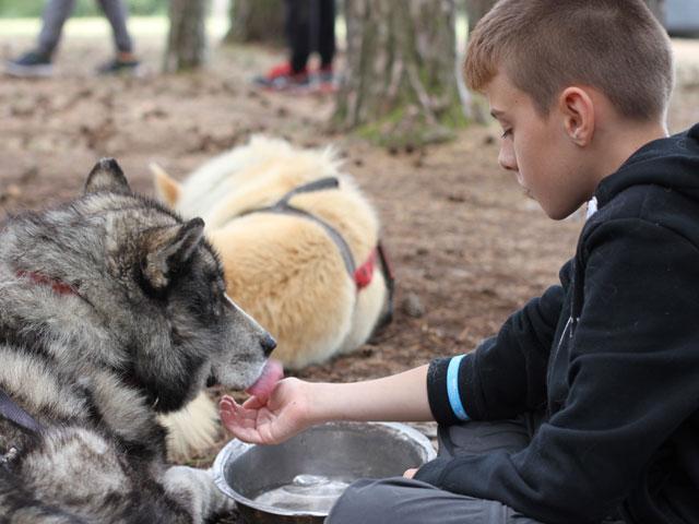Garçon donnant à boire à un chien de canirando en colonie de vacances
