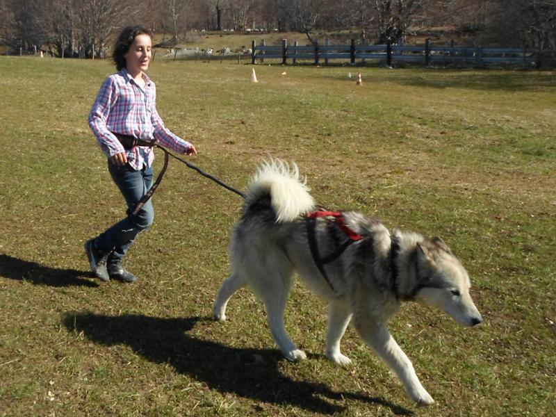 Fillette avec son chien en canirando en colo