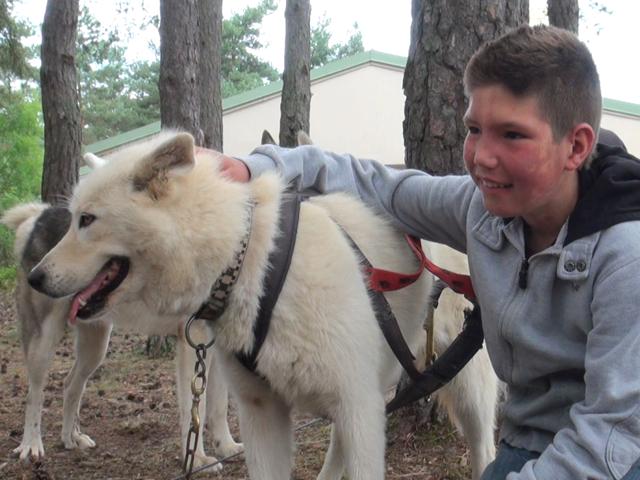 Garçon avec un chien de canirando en colonie de vacances ét-é