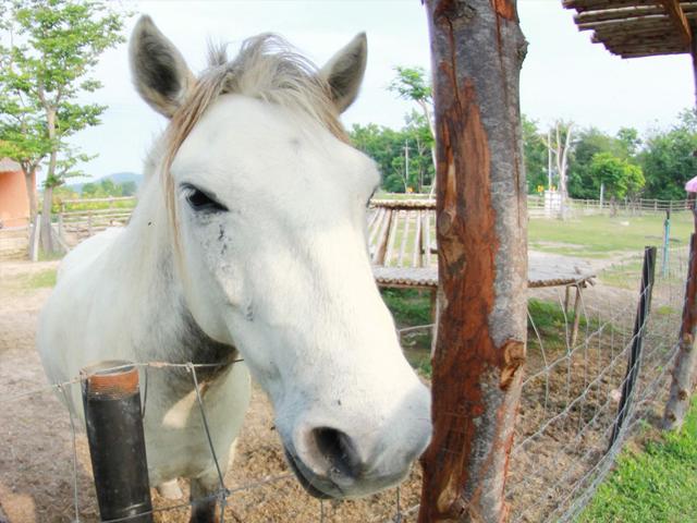 Portrait d'un cheval en extérieur en colonie de vacances équitation