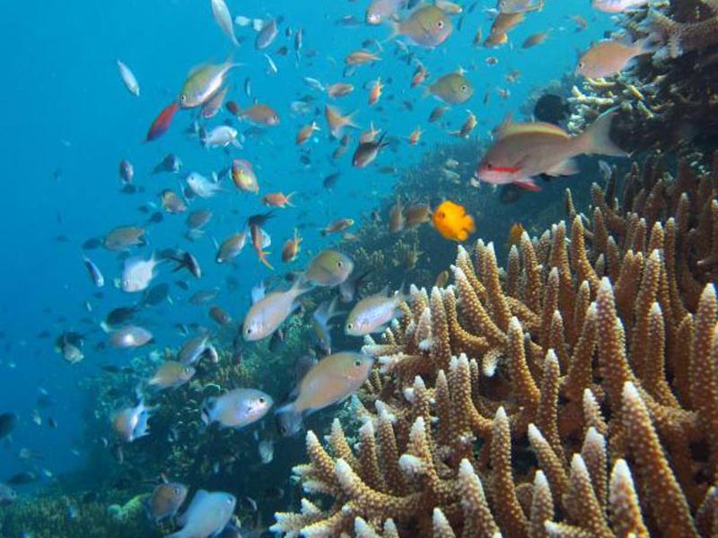 bancs de poisson en indonésie vus en colo par des ados