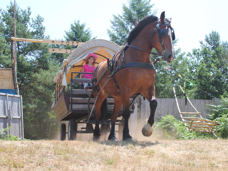 Carriole à cheval en colonie de vacances cet été