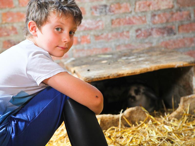 jeune garçon avec les lapins en colonie de vacances à la ferme