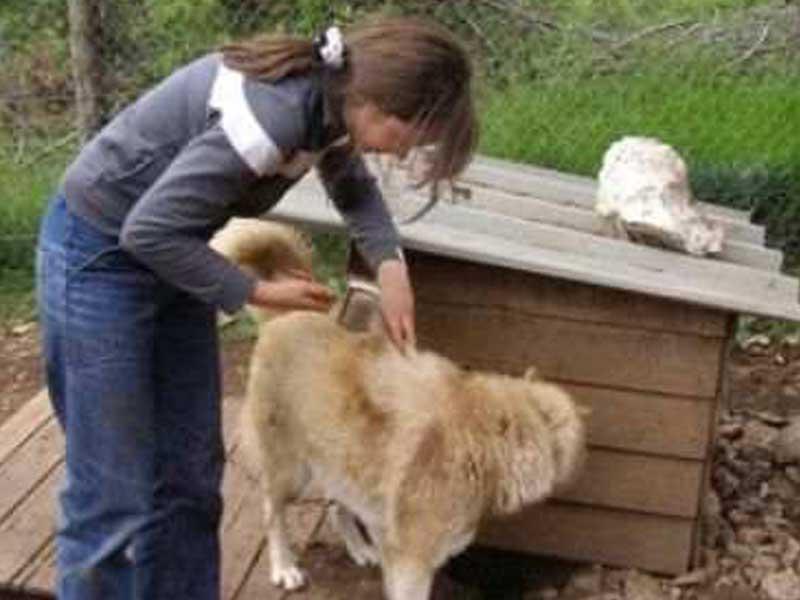 jeune fille en colo avec un chien en canirando cet été