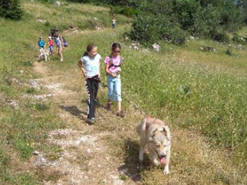 fillettes en balade avec un chien en canirando cet été en colo