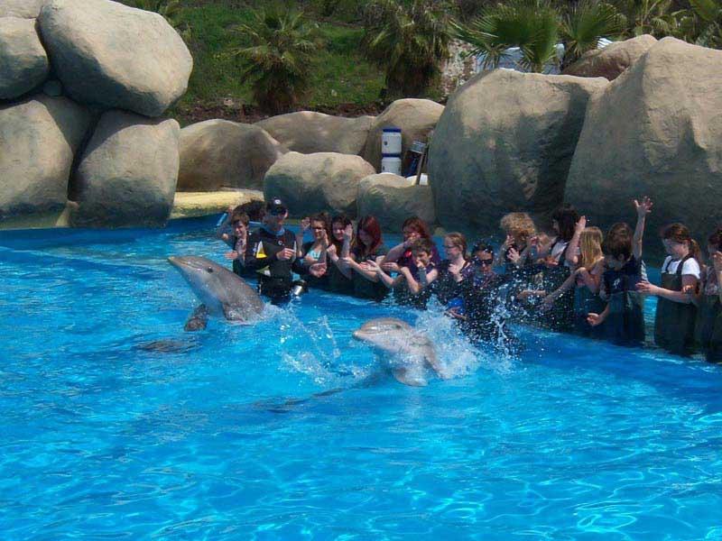 Aller voir le spectacle des dauphins à Marineland en colonie de vacances