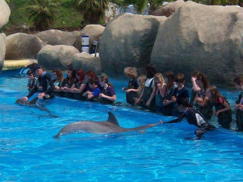 Colo spectacle aquatique des dauphins à Marineland