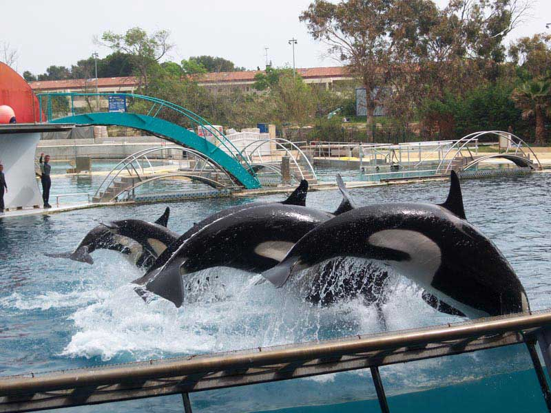 Colonie de vacances spectacle aquatique des orques à Marineland