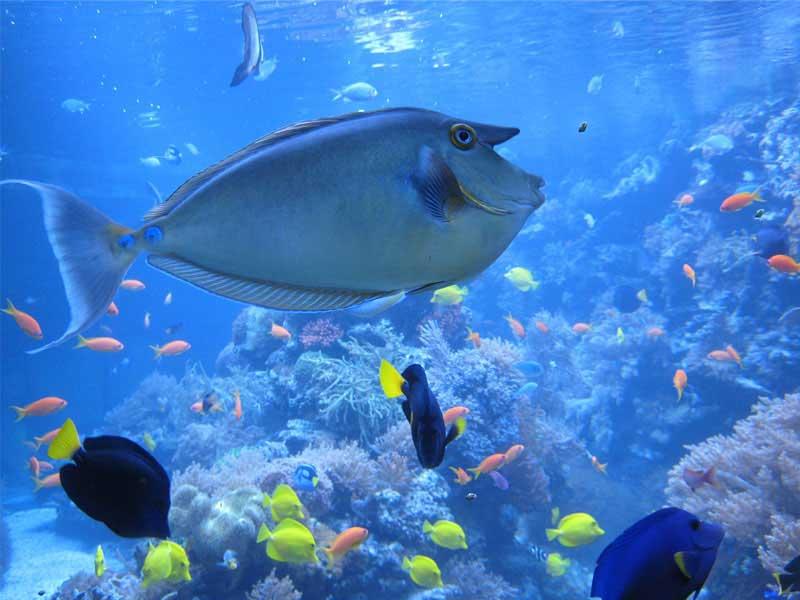 Vu d'un gros poisson à Marineland lors de la colonie de vacances