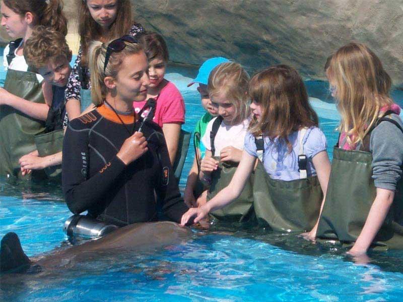 Caresser les dauphins à Marineland en colonie de vacances