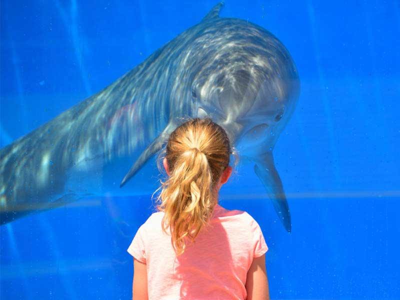 Une petite fille observant le dauphin dans l'aquarium en colonie de vacances