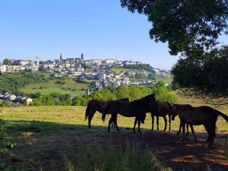Visite de la campagne en Aveyron durant la colonie de vacances