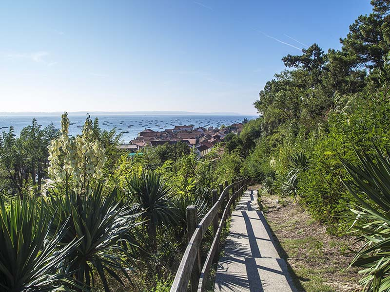 Vue, depuis un sentier pédestre, sur la ville d'Arcachon et son port, en été